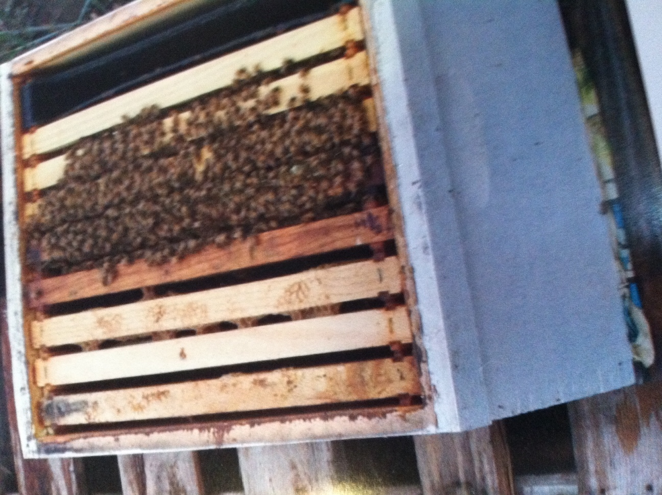 biofuel oasis beekeeping in the east bay by month