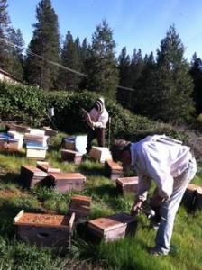 Randy Oliver (front) with our 2015 Nucs in Grass Valley.